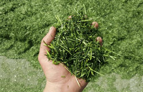Gras beoordelen
