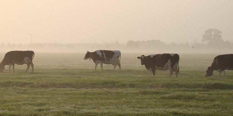 Koeien - PPP Agro Advies