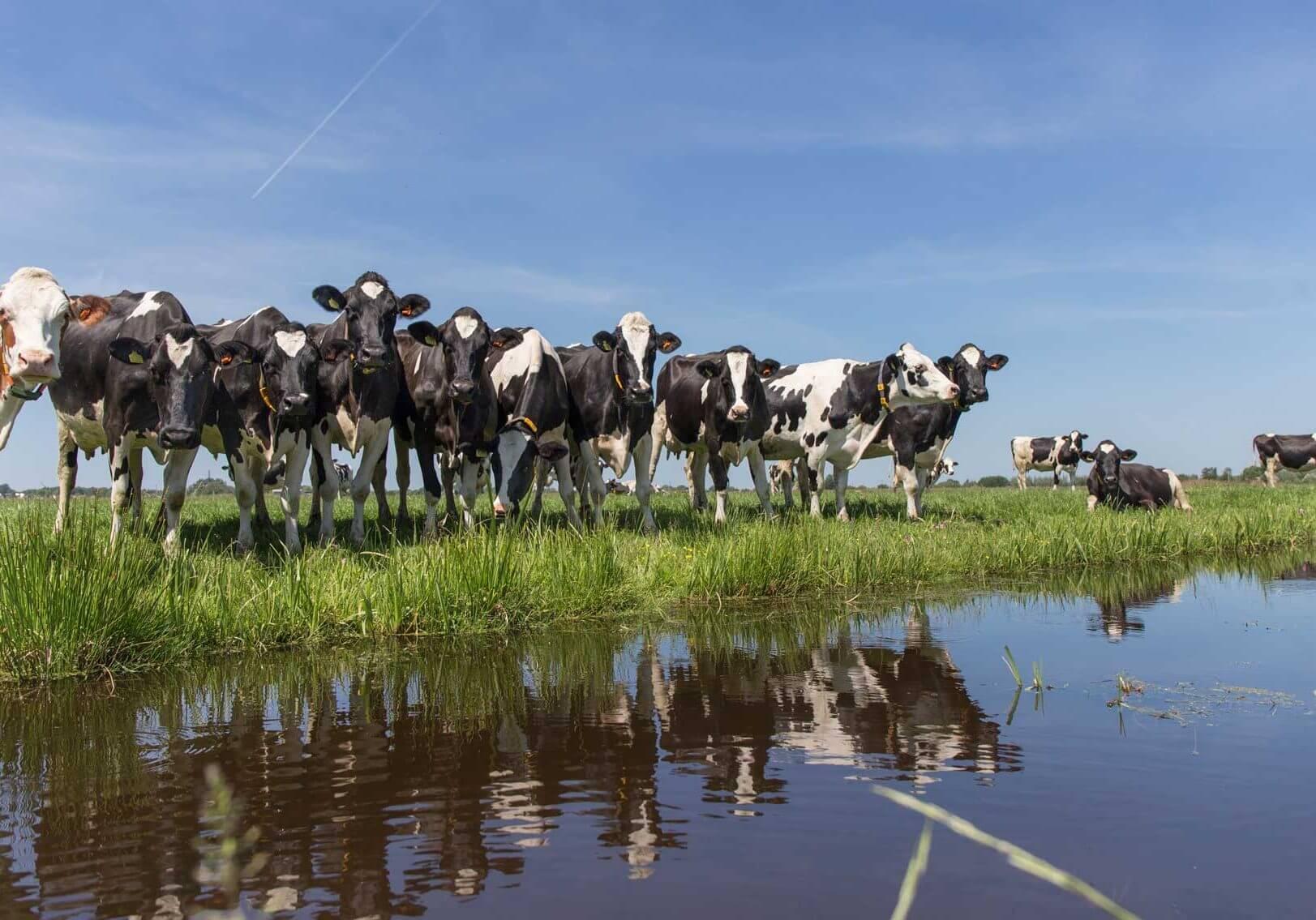PPP-Agro Advies - koeien